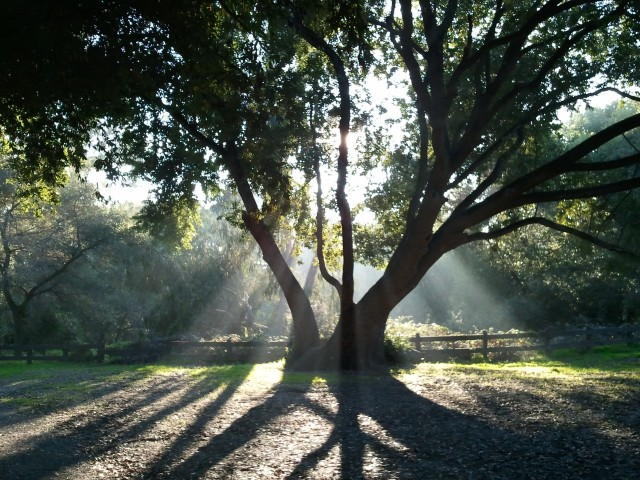 Late afternoon at the regional park