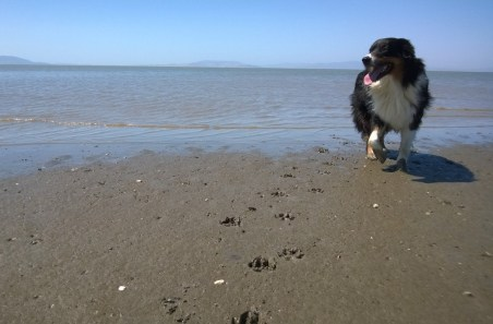 pt_pinole_beach1_crop_062615
