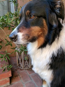 judah_profile_032818