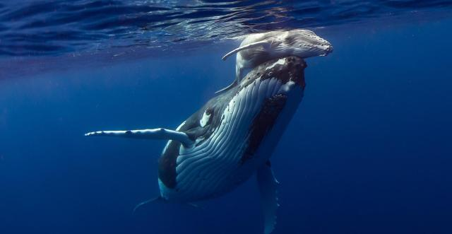 easter_humpback_whale